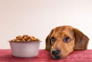 hrana-za-pse