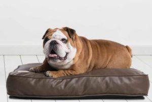 ležišče za psa Pasjastacuna